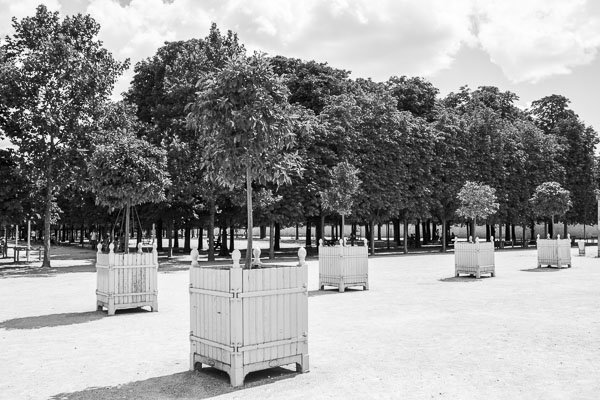 Photo d'arbustre au jardin des Tuileries